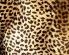 Leopardí vzor